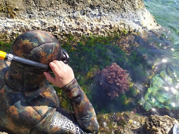 Knowledge and use of macroalgae: an unexpected resource!